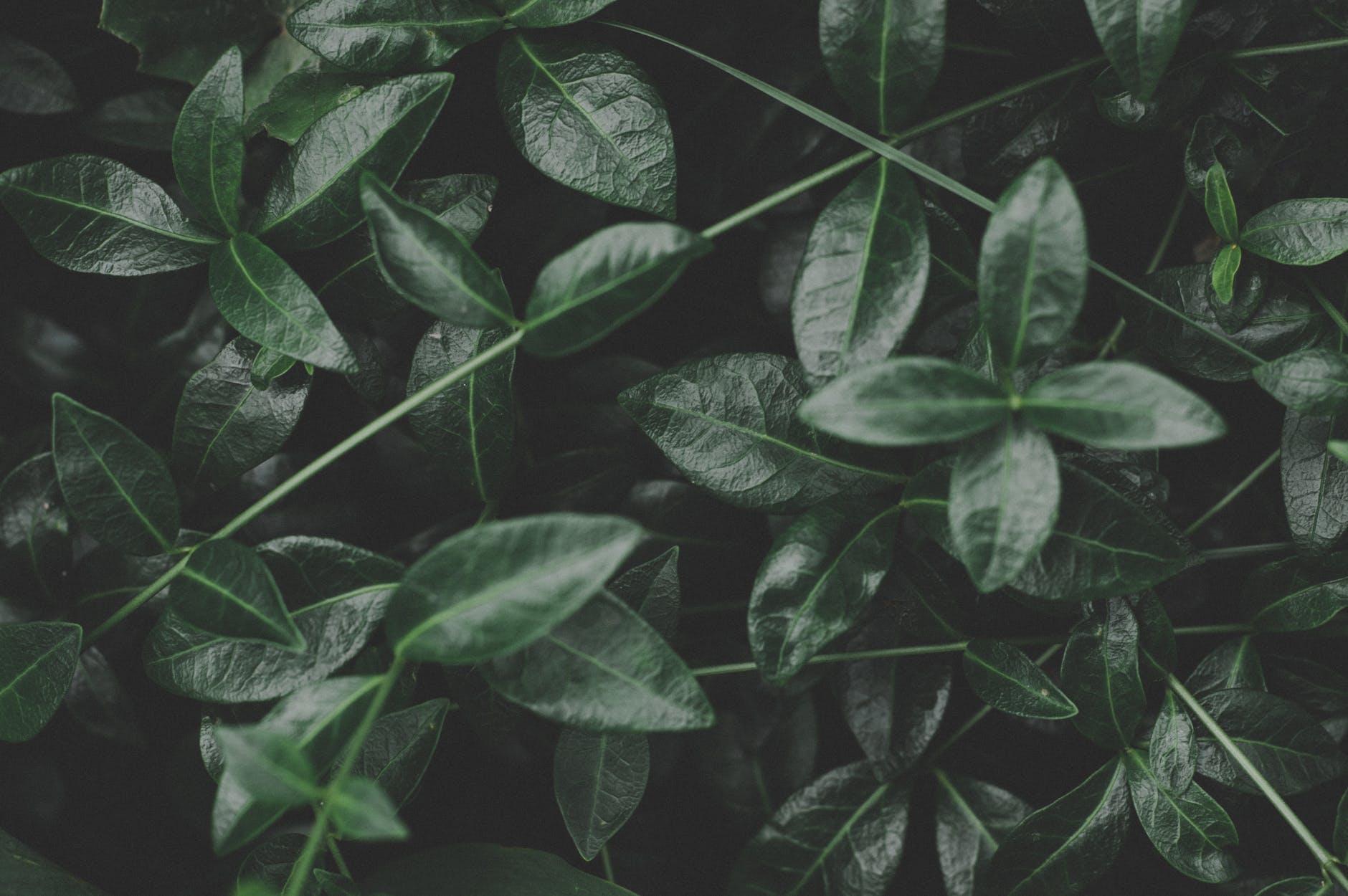Plant - Plus
